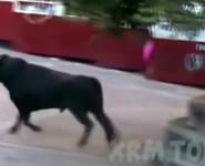 taureau-mort